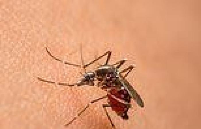 Malaria vaccine with live parasites given with cheap drug can give 100% ...