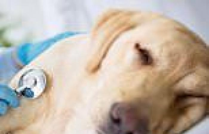 Melbourne dog gastro: over 100 dogs struck with disease after attending ...