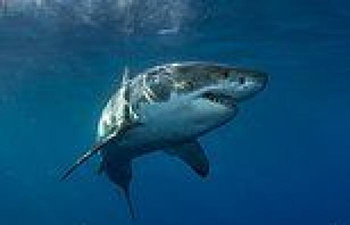 Horror as a surfer is mauled by a shark at a popular swimming spot at Crescent ...