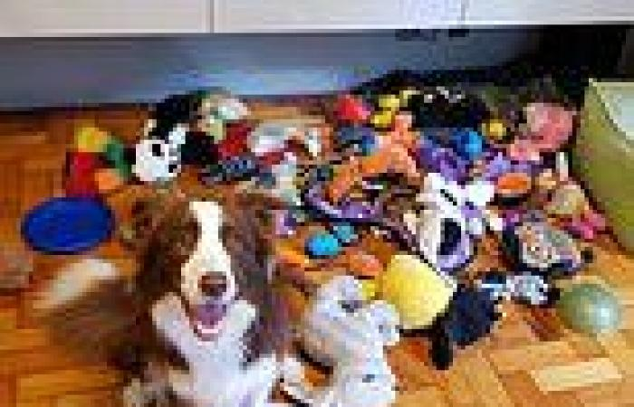 Dogs can 'effortlessly' learn names of their toys, study finds