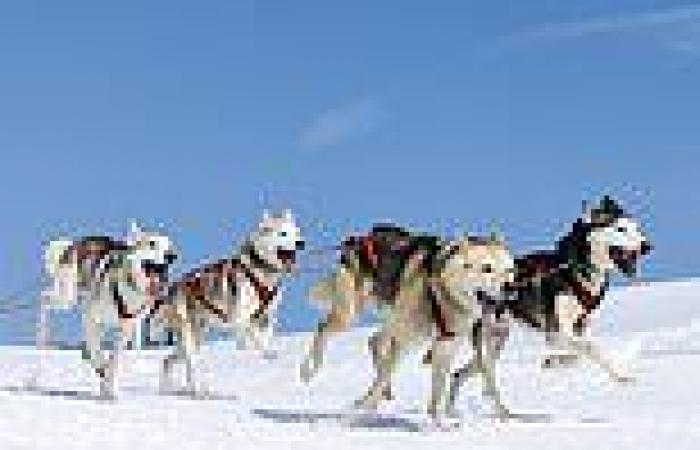 17th century sled dogs were CANNIBALS, analysis of frozen faeces samples reveals