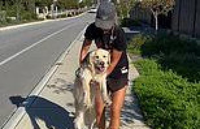 Perth woman carries her golden retriever after the stubborn pooch refused to ...