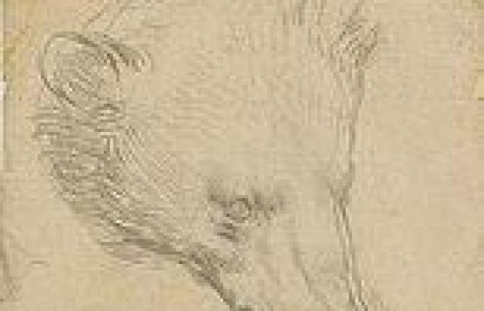 Leonardo Da Vinci £8.8MILLION animal portrait becomes most-expensive drawing ...