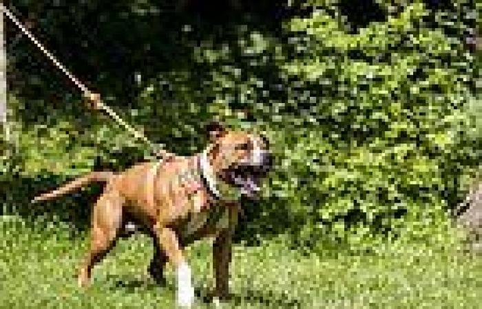 Australians slam calls to ban 'killer' dog breed after pet staffy killed a ...