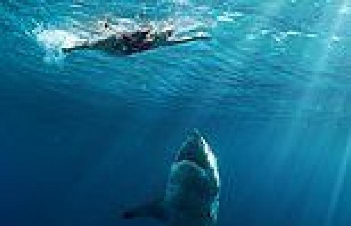 Shark attacks are rebranded as 'negative encounters' in Australia