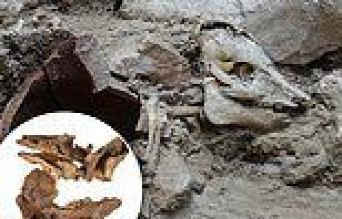 2,700-year-old pig skeleton found home in Jerusalem suggests some ancient Jews ...