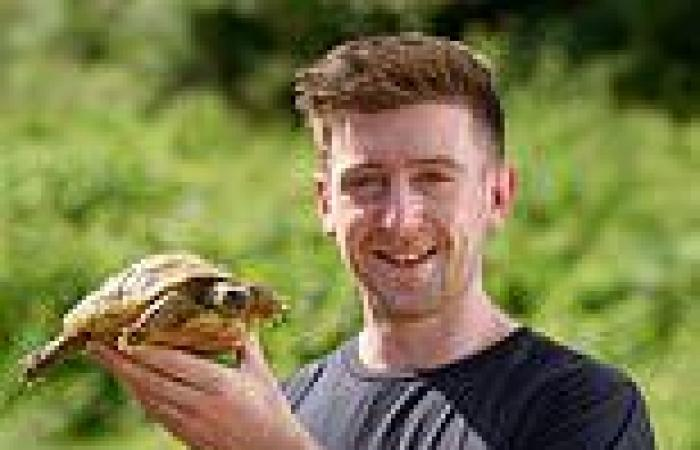 Maxi the tortoise scales 12in fence in bid for freedom and is found half a mile ...