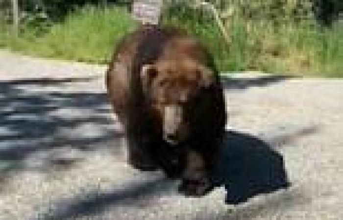VIDEO: Alaskan grizzly bear surprises tour group
