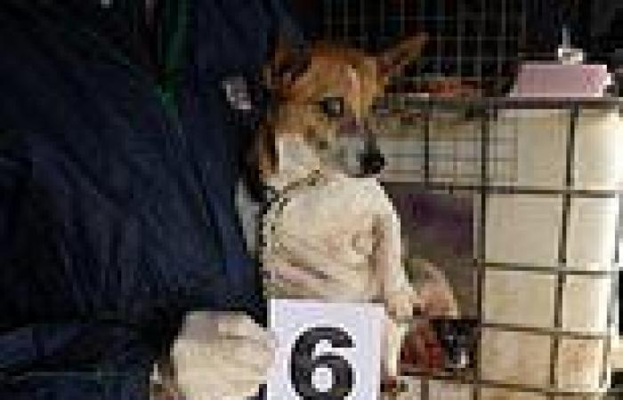 Puppy smuggling ring is jailed for selling animals that had been so badly ...