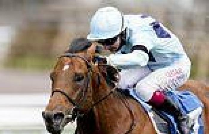 sport news Trainer Ed Walker backs Starman to take advantage of favourable conditions at ...