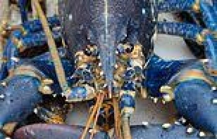 Fisherman catches one in 2million BLUE lobster off the coast of Scotland