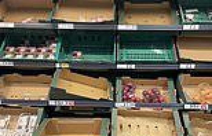 Whitehall says shop shelves will be full by Christmas as experts warn supply ...