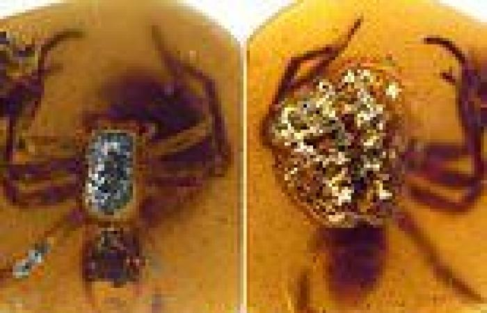 Fossilized mother spider protecting her young is found preserved in ...