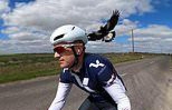 Fearless cyclist offers advice on swooping magpies as a Sydney suburb decides ...