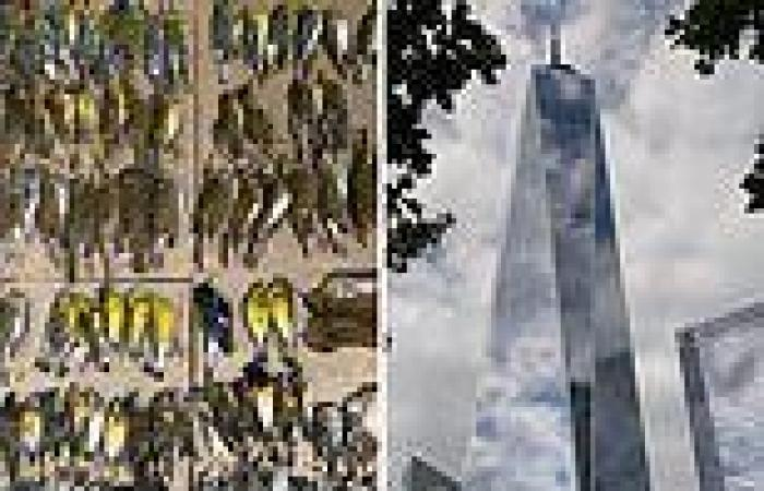 Almost 300 migratory birds are killed after slamming into New York's WTC in ...