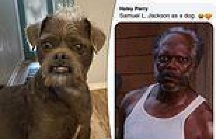 Couple shares photo of rescue dog that people say resembles Samuel L Jackson