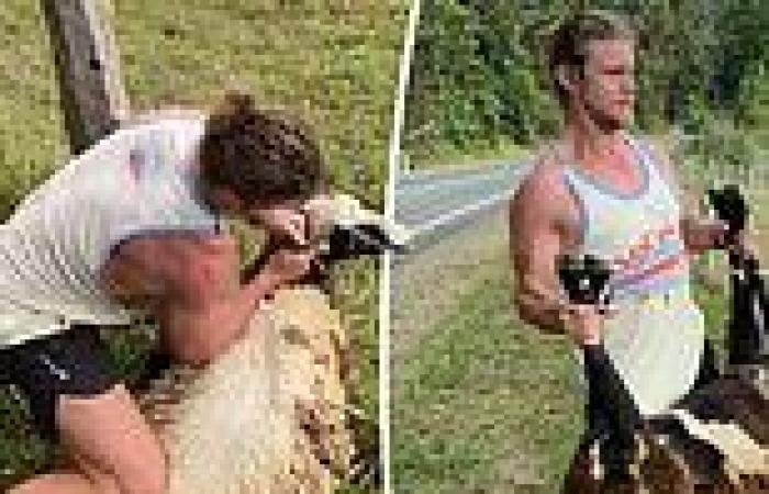 Nick 'Honey Badger' Cummins heroically saves a sheep from a barbed wire fence