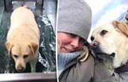 Samantha Armytage shares a video of her beloved dog Banjo walking on an ...